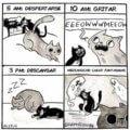 El itinerario de tu gato