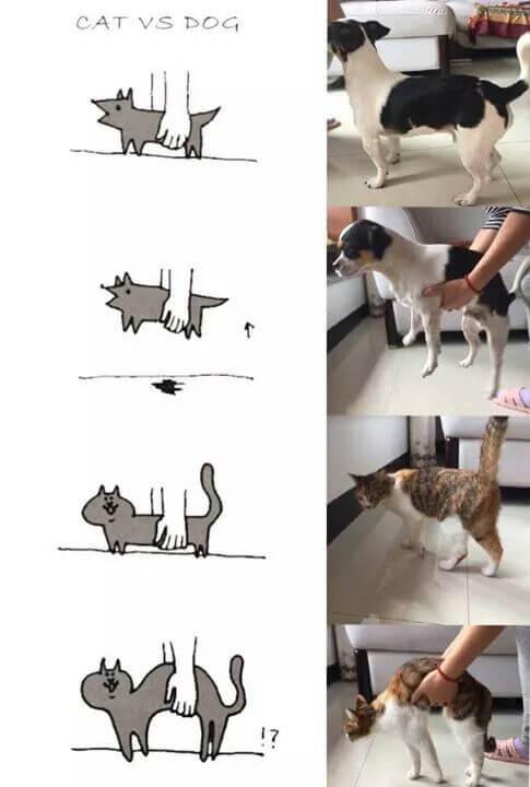 Perros vs Gatos en anatomía - QueComico.com