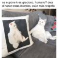 Cuando estas enamorado de tu gato