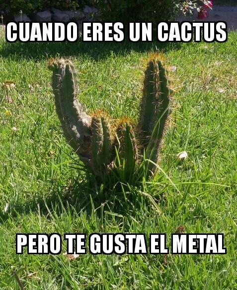 Cuando eres un cactus