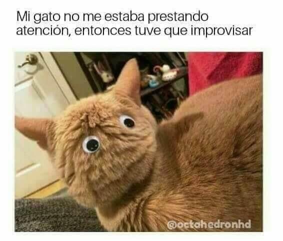 Cuando tu gato no te presta atencion