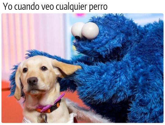 Cuando veo cualquier perro