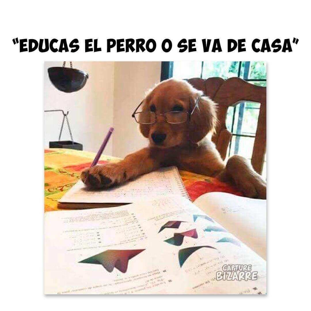Educas al perro o se va de la casa