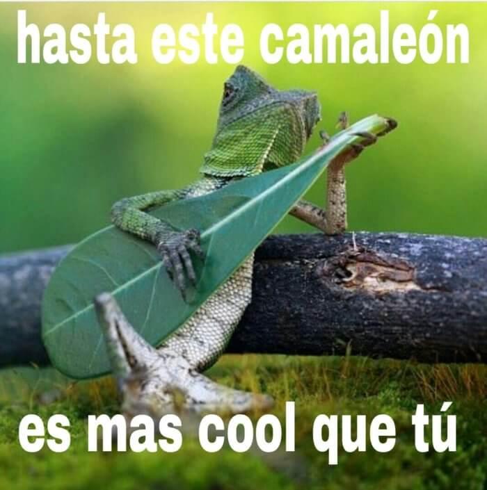 Hasta este camaleon