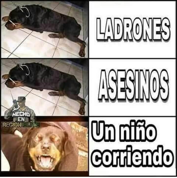 Peligros segun mi perro