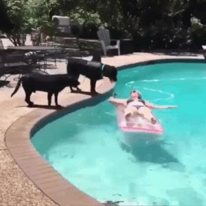 Que bello es tener mascotas
