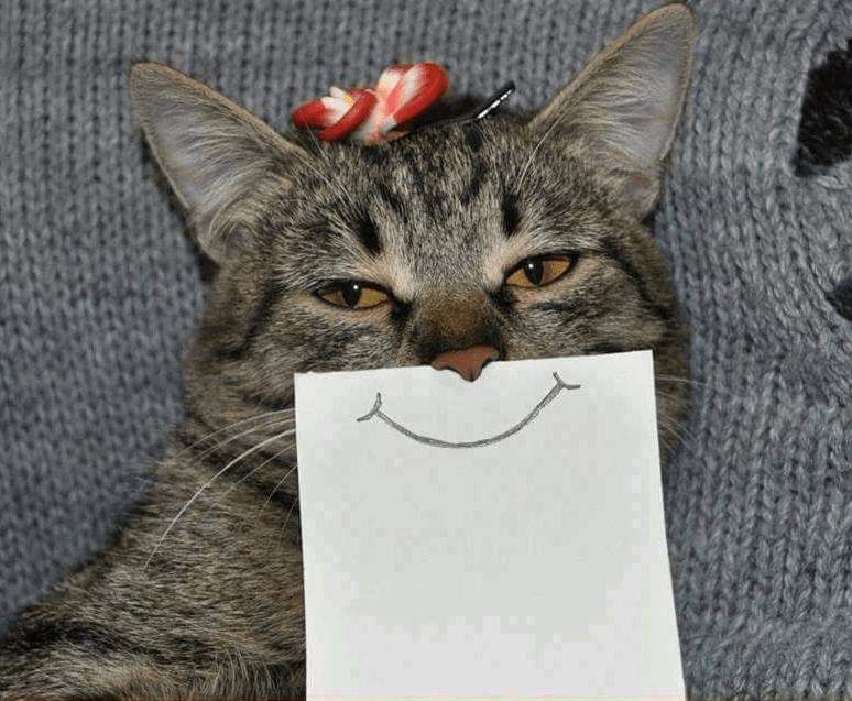 Como hacer feliz a tu gato