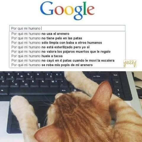 Cosas que buscan los gatos