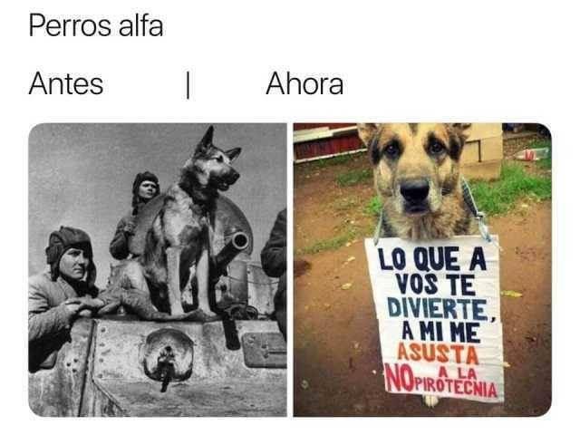 Perros de antes y ahora