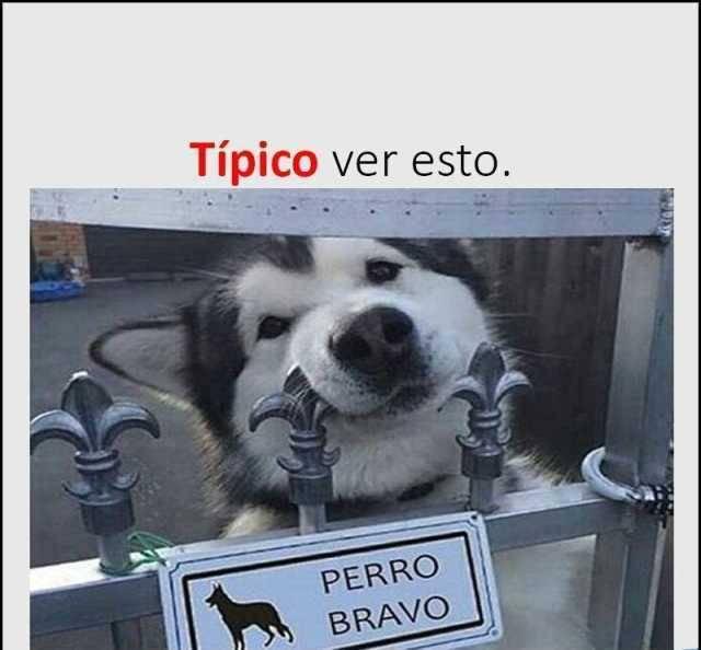 Tipico de los perros