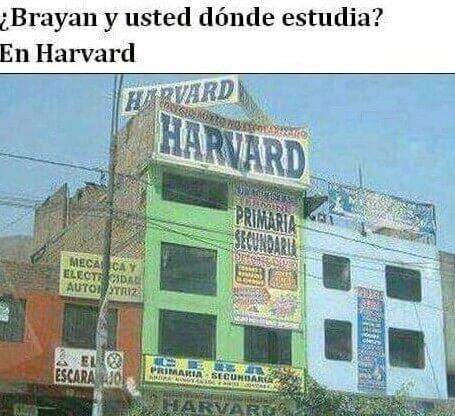 Yo estudio en Harvard