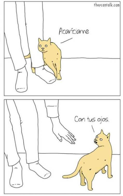 Cuando un gato quiere cariño