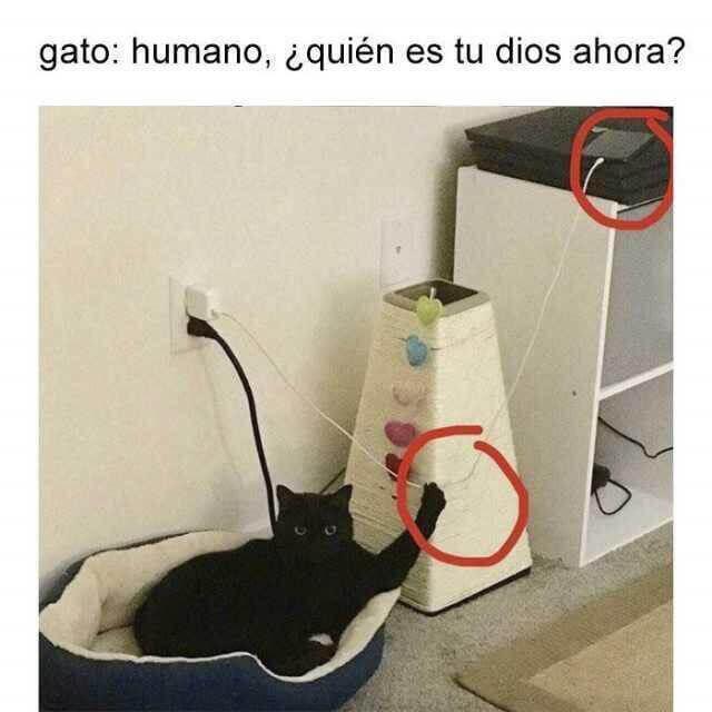 El gato es tu nuevo Dios