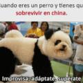 Cuando eres un perro en China