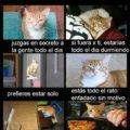 Signos de que eres un gato