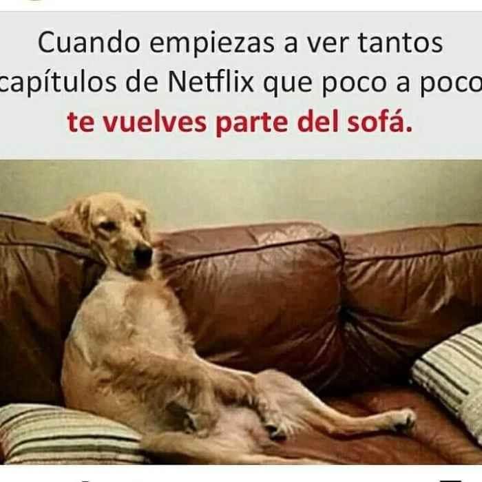 Cuando vez mucho Netflix