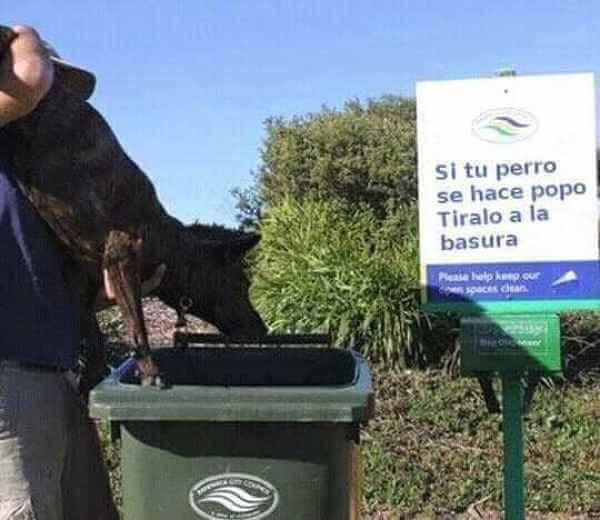 Si tu perro se hace popo