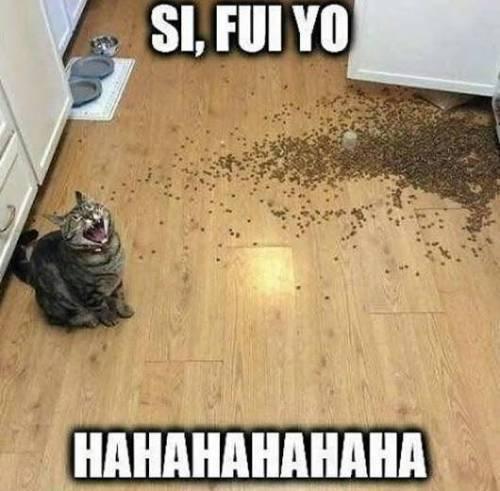 Cuando el gato ace algo malvado