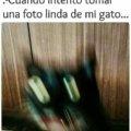 Cuando trato de fotografiar a mi gato
