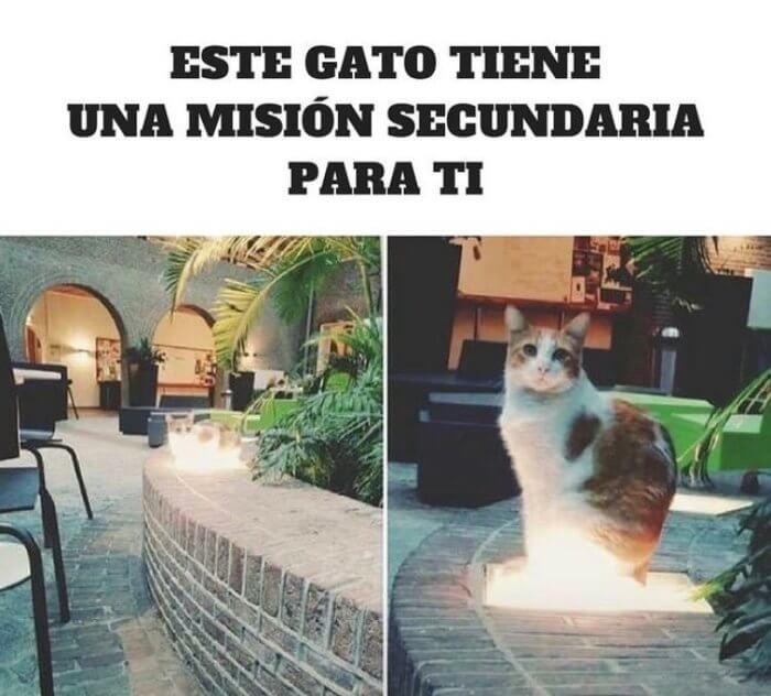El Gato tiene una mision secundaria