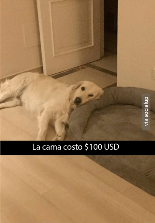 La cama costo 100 dolares