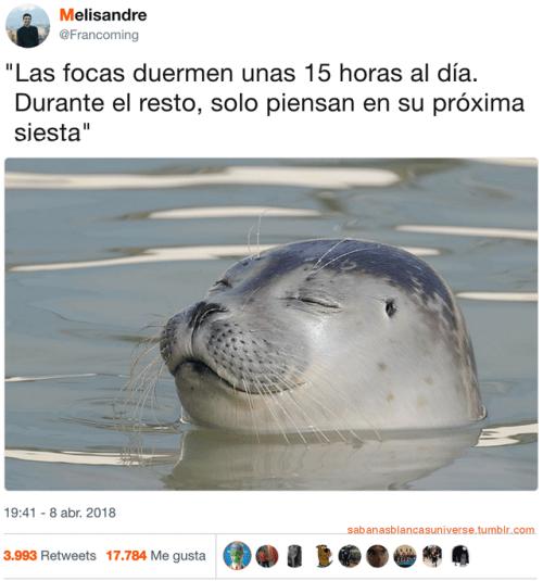 Las focas duermen cerca de 15 horas