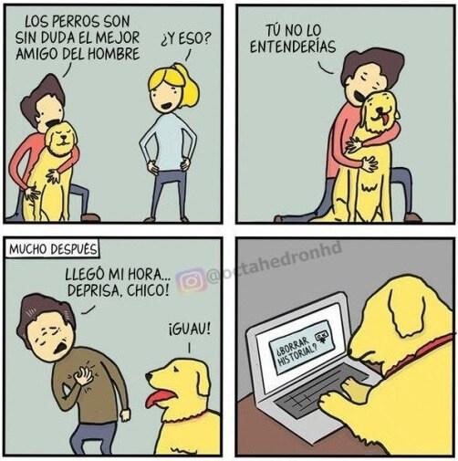 Por que el perro es el mejor amigo del hombre