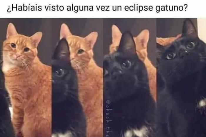 Un eclipse gatuno