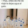 Antes de salir le dejas agua al gato