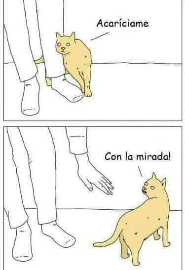 Cuando el gato quiere ser acariciado