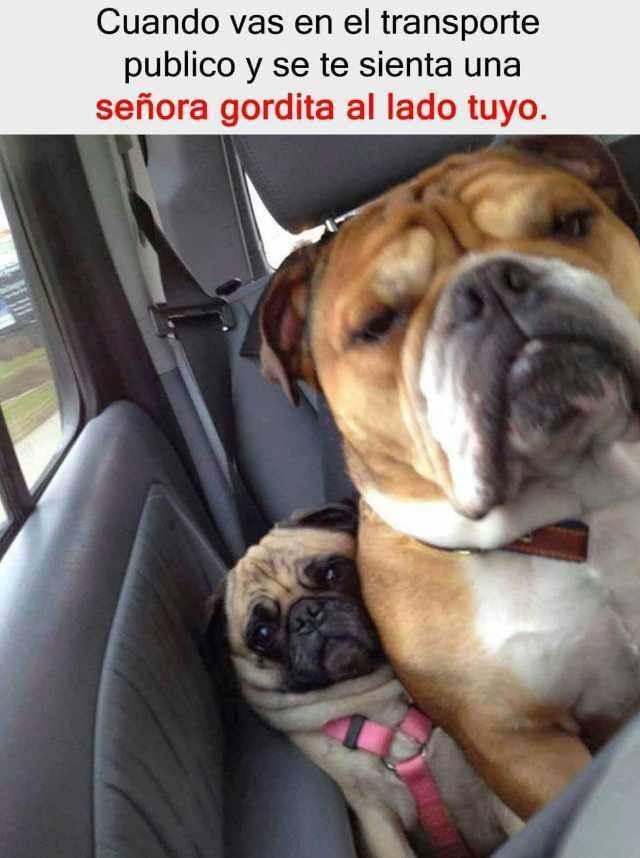 Cuando te sientas con una señora gorda en el carro