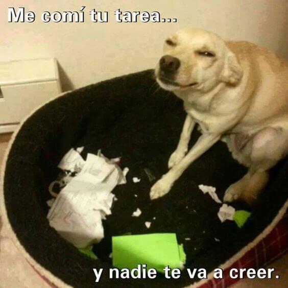 Cuando tu perro te traiciona