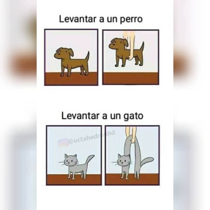 Levantar un perro vs levantar a un gato