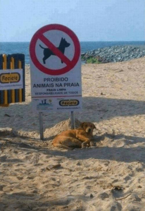 Prohibido animales en la playa