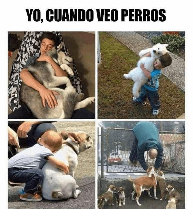 Cada vez que veo perros