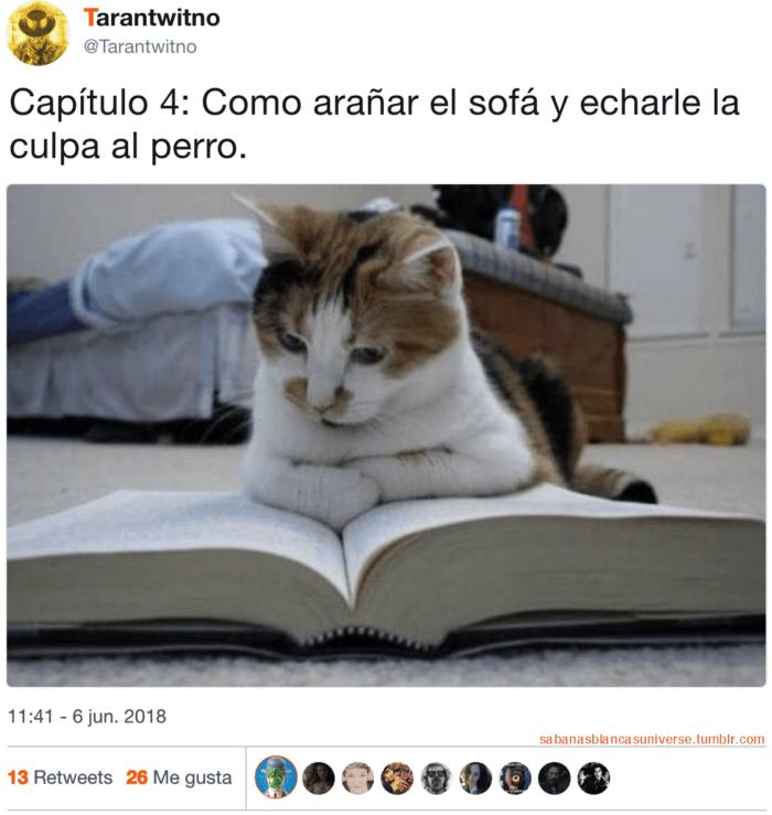 Lectura de gatos