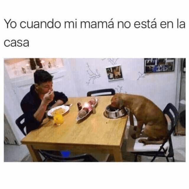 Cuando mi madre no esta en casa