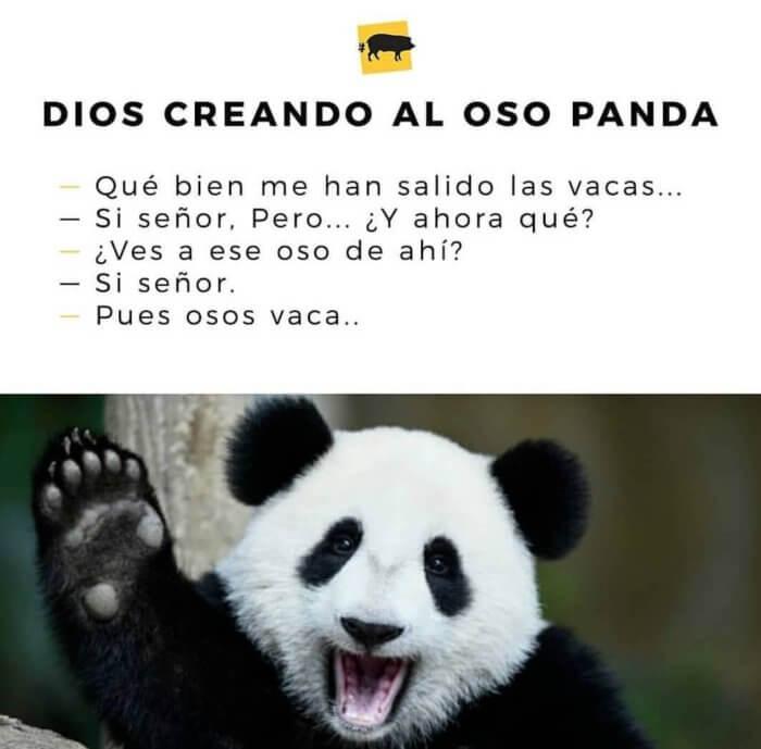 Dios creando el oso panda - QueComico.com
