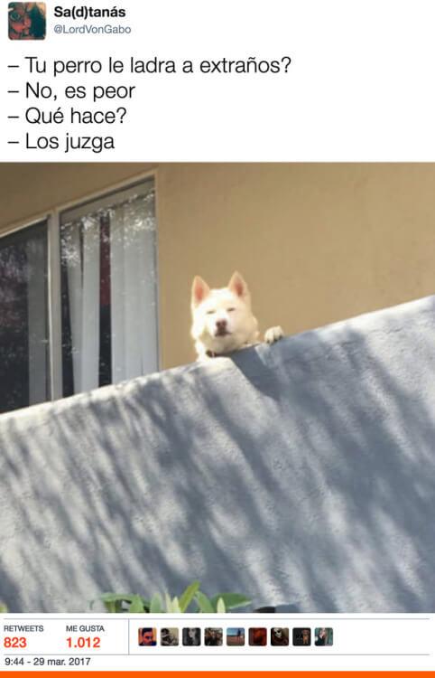 Tu perro le ladra a los extraños