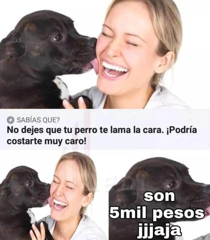 No dejes que tu perro lama tu cara