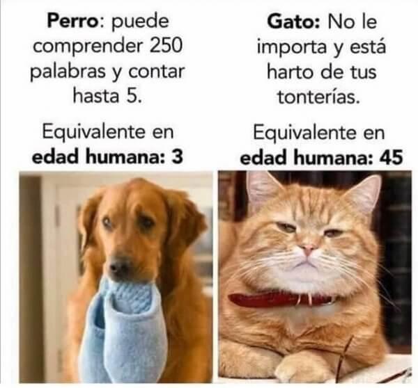 Comparando al perro vs el gato