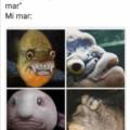 Cuando me dicen que hay muchos peces en el mar