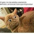 Cuando tu gato no presta atecion
