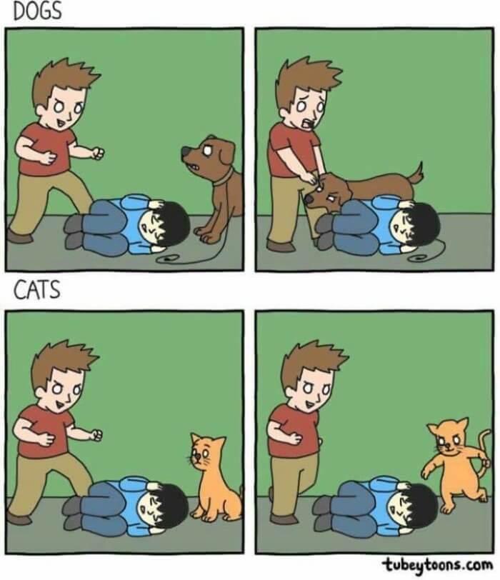 Perros vs gatos en peleas