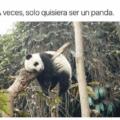 Solo quisiera ser un panda