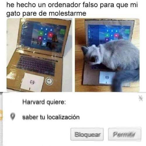 Un ordenador falso para el gato