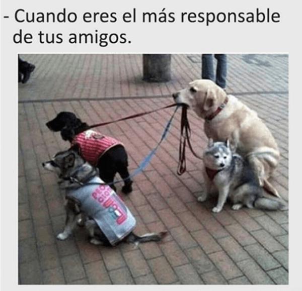 Cuando eres el mas responsable de tus amigos