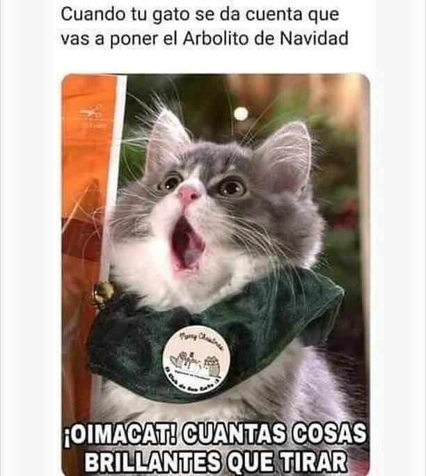 Cuando tu gato descubre el arbol de navidad