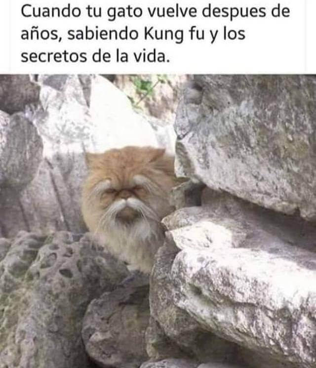 Cuando tu gato regresa