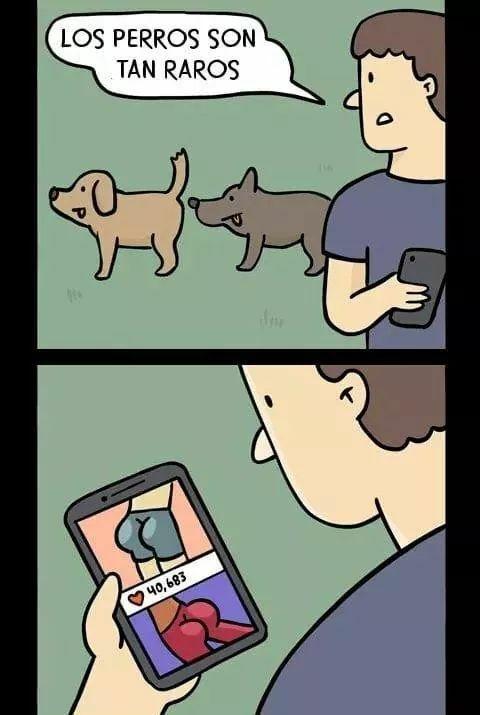 Los perros son tan raros